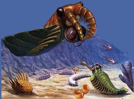 Anomalocaris and other Burgess Fauna - click for more explanation